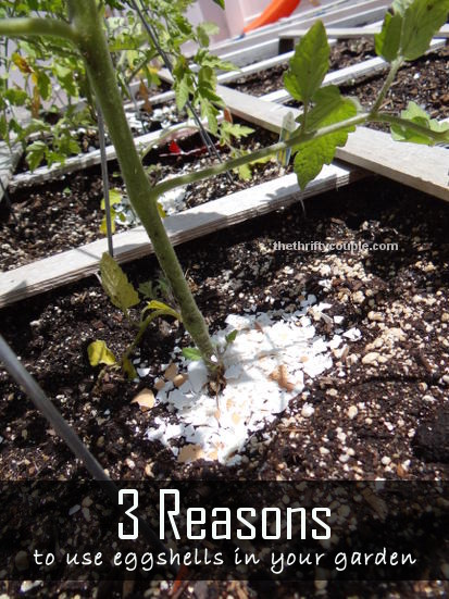 3-reasons-to-use-eggshells-in-your-garden