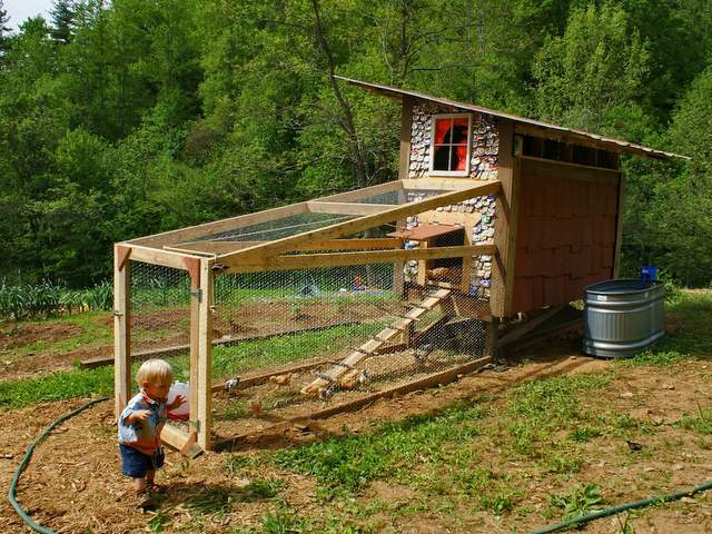 chicken-coop-roundup
