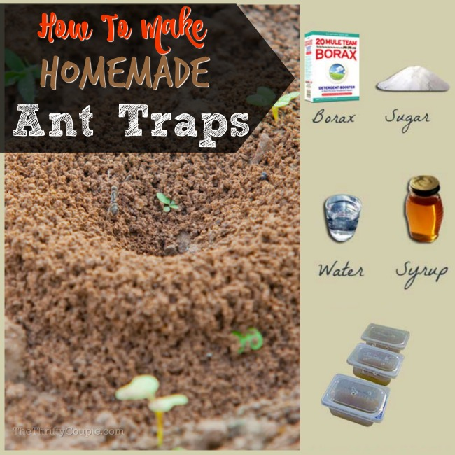 How To Make Homemade Ant Traps