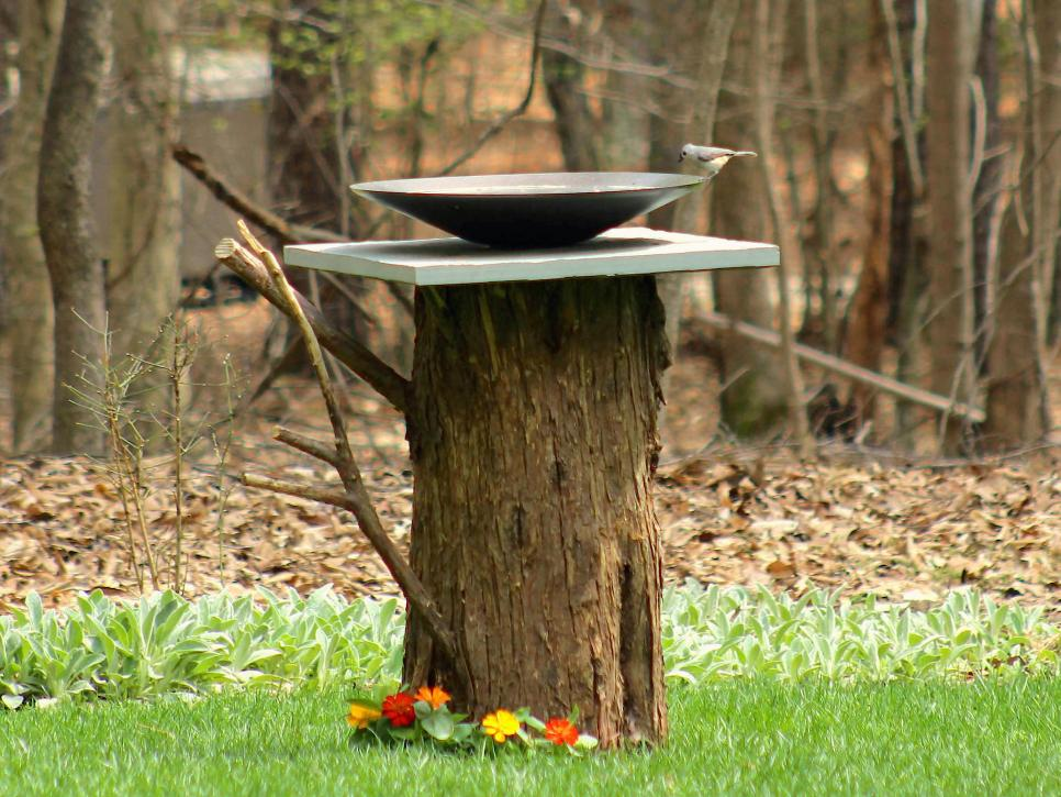 bird-bath-made-from-old-tree-stumpg