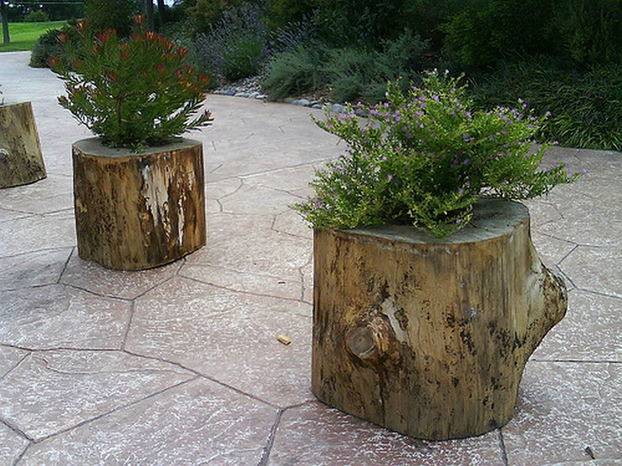 outdoor-planters-made-from-tree-stumps
